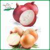 sell 2014 Onion/Red onion/Yellow onion