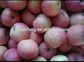 Pomme fraîche de noms de tous les fruits secs pour l'exportation
