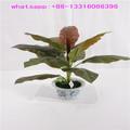 chinês lxy080314 rubi artificial bonsai plantas ornamentais falso bonsai planta para a decoração