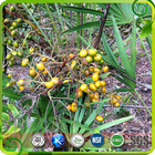 USD13.5/KG,saw palmetto berry extract , Saw Palmetto P.E.(25%,45% Fatty acids)