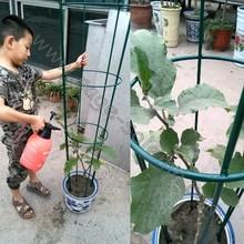 Powder Coated Dark Green Color Tomato Cage
