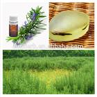 high quality organic dried rosemary leaf extract liquid rosemary hair oil