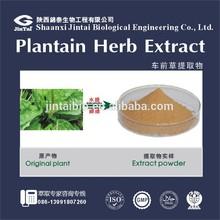 plantaginaceae herb P.E. 10:1 plantaginaceae extract powder