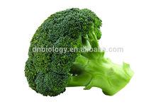 Broccoli Extract/Brassica oleracea L. Extract/ Broccoli Powder