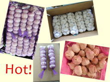 Fresh New Garlic Price of 2014, Red Garlic, Purple Garlic