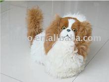 dog model / model dog / pet model