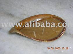 operculum shells