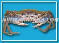 Sri Lanka Crab