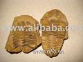 trilobites geoda de fósiles
