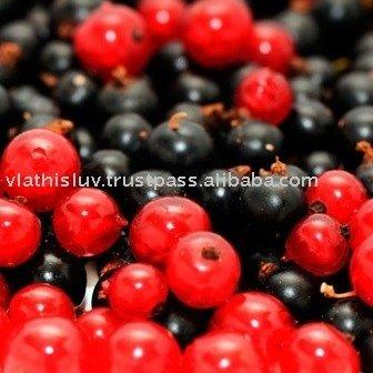 Fruit plants / currant seedlings