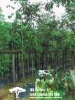 Chrysophyllum Caneito(Outdoor Plants)
