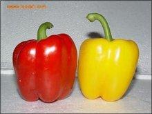 fresh color pepper