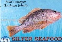 John Snapper,Red Snapper