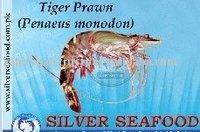 Shrimp - Tiger Prawn