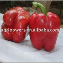 SP959 vegetable seed