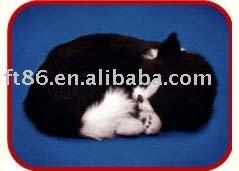 Chiwawa, chat de chocolat Labrador, noir et blanc