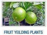 Fruit Yielding Plants