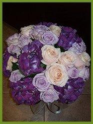 Purple Haze, rose