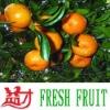 Chinese mandarin orange (Honey mandarin ,Fresh mandarin, JJ01