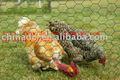 Malha de arame galvanizado, a criação de animais