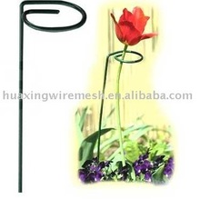 Single Supports for Prized Flowers