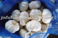 prue white Fresh Garlic