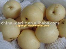 Chinese Fresh Pear