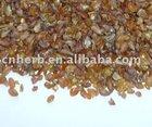 tartarian buckwheat