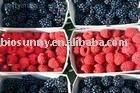 Palm leaf Raspberry Fruit acid