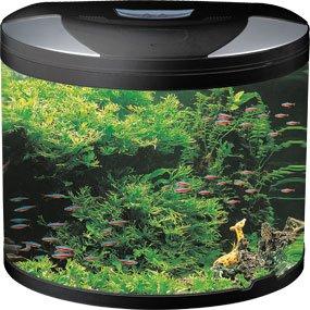 Half Round Glass Aquarium