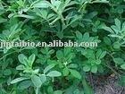 Stevioside/stevia(Rebaudioside A)