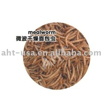 Microwave Dried Mealworm