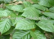 Ramulus Uncariae Rhynchophyllae cum Uncis Extract 10:1