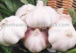 Garlic P.E.(KOSHER certificated)