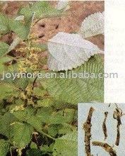 Ramie Leaf Extract Boehmeria Nipononivea Fatty Acid 30%