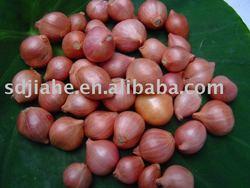 fresh shallot/onion