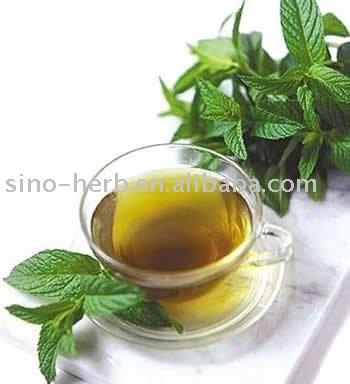 Thé d'herbe de feuille de mûre pour la tension artérielle de équilibrage