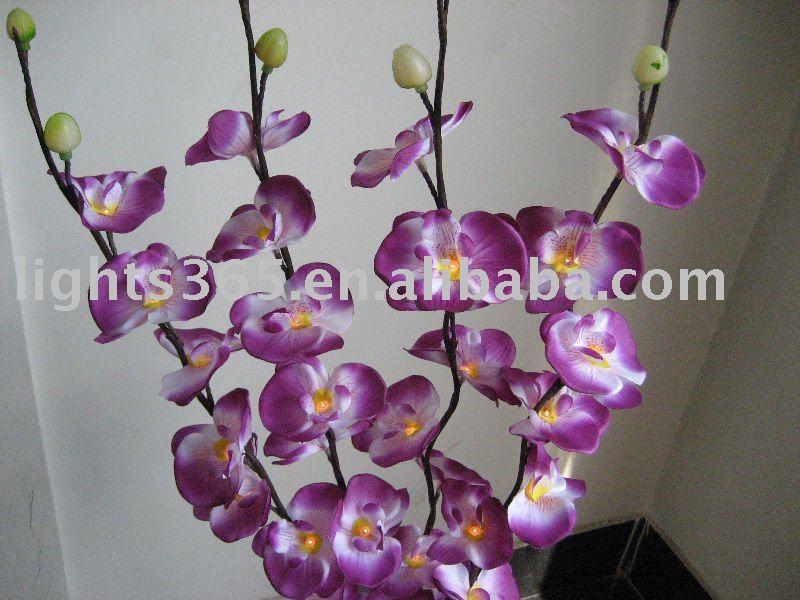 Russian Flowers 2 Blue Orchid 2000 Boys | Download Foto ...: http://www.filmbokep69.com/download-pic/russian-flowers-2-blue-orchid-2000-boys/id-aHR0cDovL2kwMS5pLmFsaWltZy5jb20vcGhvdG8vdjAvMzM2NDI0MTgzL0xFRF9lbXVsYXRpb25hbF9tb3RoX29yY2hpZF9mbG93ZXJfbGlnaHRzLmpwZw==.html