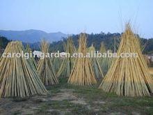 Bamboo Stake - Tonkin cane - Bamboo cane