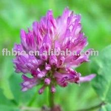 Red Clover Extract(Isoflavones)