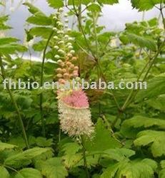 Black Cohosh PE. with Triterpenoid Saponis 2.5% CAS 84776-26-1