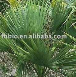 Saw Palmetto Extract /Serenoa serrulata with 25% fatty acids