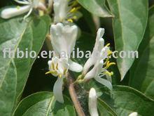 Eucommia Ulmoids Oliv(Chlorogenic acid)