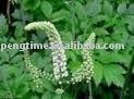Black Cohosh Extract Triterpene 2.5%
