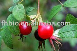 Rose Hips As Antioxidant