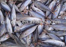 frozen fish (horse mackerel)