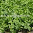 Coriander Herb Extract