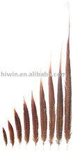 Golden Pheasant Tails