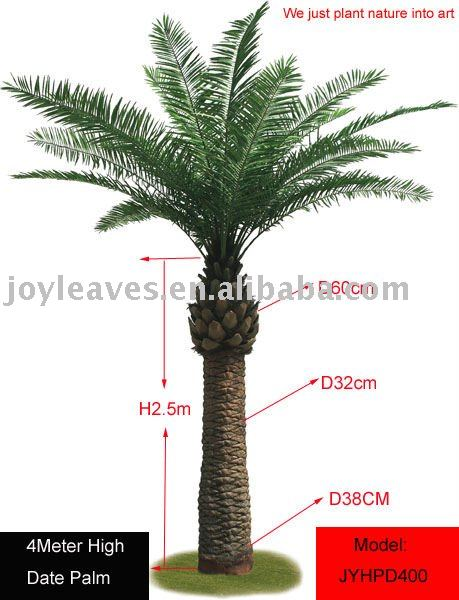 date palm tree clip art. dwarf date palm tree