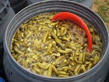 canned cucumber in vinegar